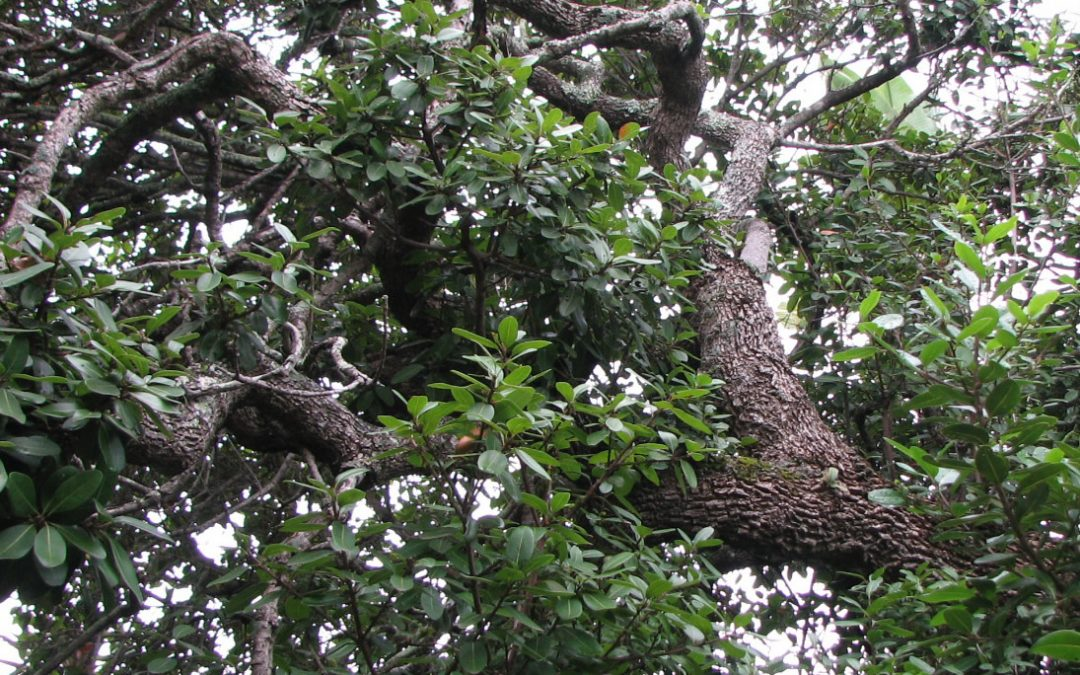 Know your trees – Milkwood preservation