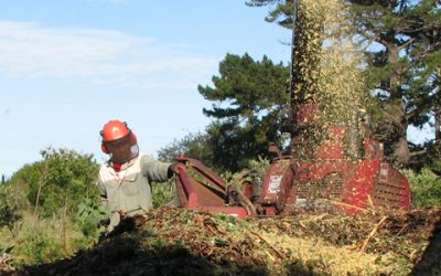 Mulch: A wonderful natural gift from trees to trees